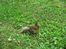 белочка в парке Петергофа